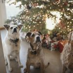 Puppy Love: The 13 Best Christmas Gifts to Get Your Dog This Christmas